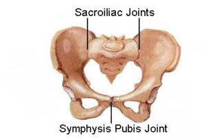 pelvis-symphysis-pubis